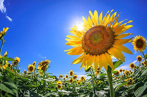 夏という季節がメンタルヘルス不調になりやすい理由とケアの仕方 ...