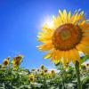 夏という季節がメンタルヘルス不調になりやすい理由とケアの仕方